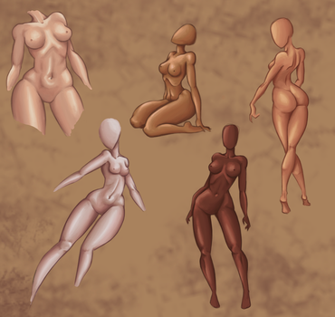 Female anatomy by Go0wy