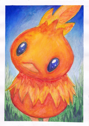 Torchic by Icewither