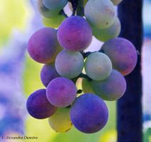 Summer Grapes by DegradeFlower