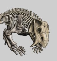 Placerias skeleton (reduced) by Typothorax