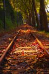 On the way to Autumn by P3droD