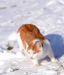 Cat in winter by ThaliaNoldor