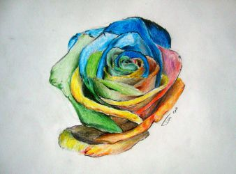 Colored Rose by tdenes