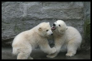 Polar bear siblings by AF--Photography