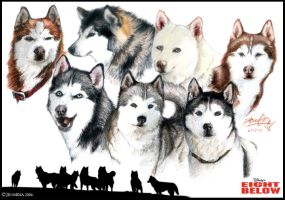 The Cast of Eight Below by Lillidan86