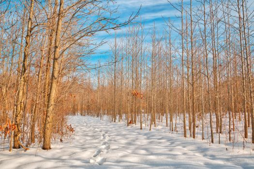 Bare Winter Tree Trail (freebie) by somadjinn