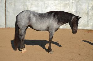 DWP FREE HORSE STOCK 140 by DancesWithPonies