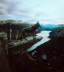 WINTER IS COMING by Cadavroux