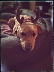 Sadie Sue Shagbottom and the Antler Incident by KWilliamsPhoto