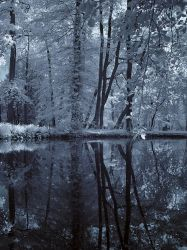 False color Maksimir 3 by TheSecondMaker