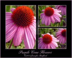 Purple Cone Flowers by Jenna-Rose