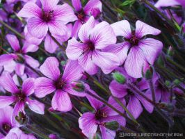 Purple Flowers 2 by yuzukko