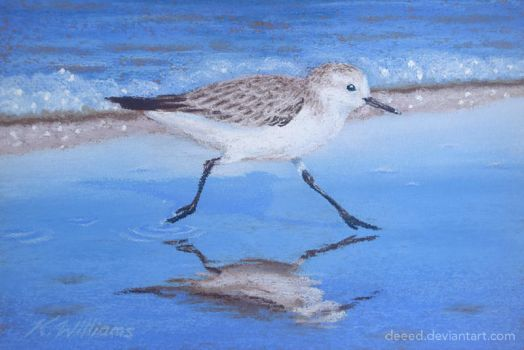 Sandpiper in Pastels 2 by deeed