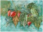 Physalis and begonia