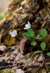 wildflower and tree stump by gbarill