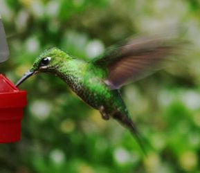 Humming Bird by AndYouThoughtICared