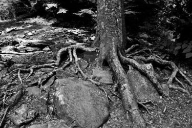 roots by MYMICHELLE1970
