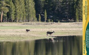 Tuolumne Meadows 10 by RoonToo