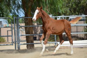 DWP FREE HORSE STOCK 147 by DancesWithPonies
