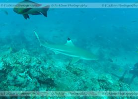 Black Tip by FicktionPhotography