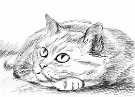Cat pen and pencil sketch by LaYoosh
