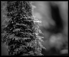 Moss #2 by Roger-Wilco-66