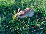 Fiona Eating Clover and Carrots by AthenaIce