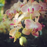 orchids by september28