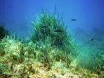 underwater 8-18 scuba diving by poseidonsimons-s