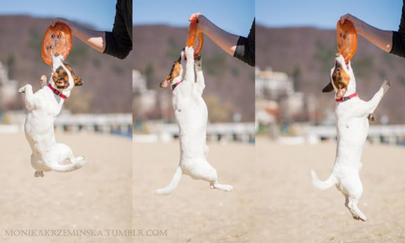 In Jack Russell style! by Sarkolia