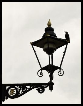 Lamp and Starling by Skia