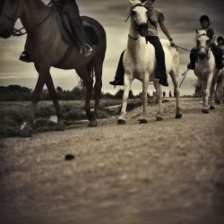 horses by julie-rc