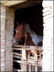 Horse by Angye90