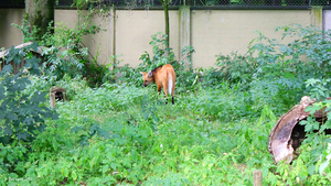 Zoo Augsburg - Maned Wolf by Delragon