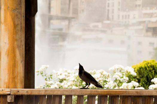what's up, bird? by Sadeq-Photography