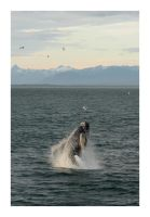 Breaching Humpback by MadHatterVVVI