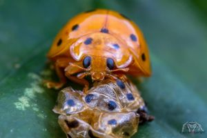 LadyBird by Anrico