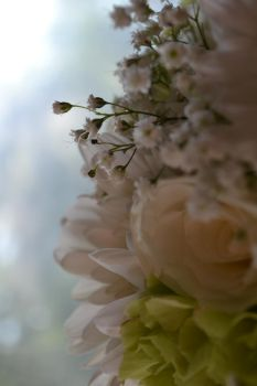 Baby's Breath by rayvin734