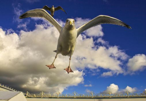 Angry Seagull by JamesTPhotography