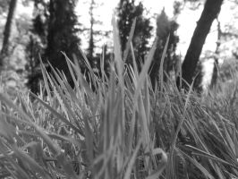 Grey Grass by MrDoomy
