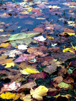 Fallen Leaves by LSPhotographyStore