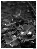 .drops hearts. by laminimouse