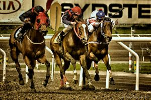 Horse Racing -The Home Stretch by AndersStangl