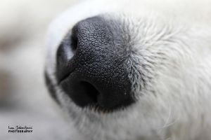 Closeup doggy by IJPhotography