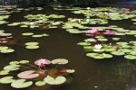 lillypad by JackH0L3
