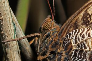 Close-up of a butterfly 05 by s-kmp