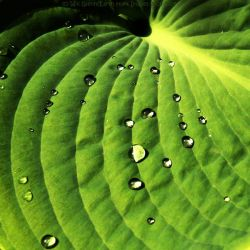 Droplets of Life by Earth-Hart