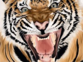 Roaring Tiger by Phabee