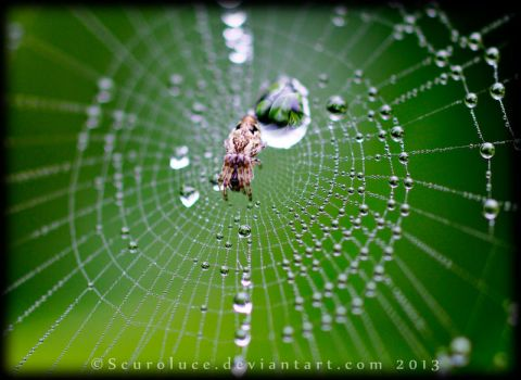 Hide Away Spider by scuroluce