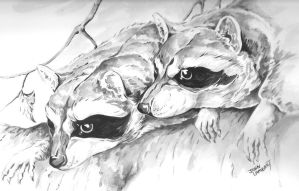 Raccoons by Batman4art